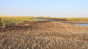 image: Mixed Report for Oiled Salt Marshes