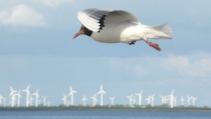 image: Ornithologists Want Windmill Research
