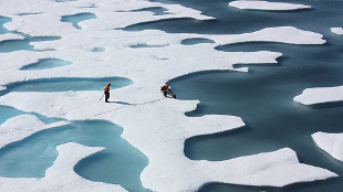 image: A Greener Arctic