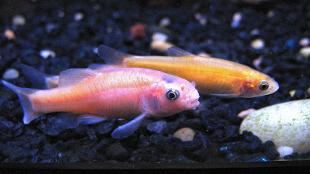 image: Autistic Fish?