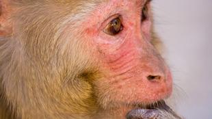 image: Decoding Monkey Thoughts