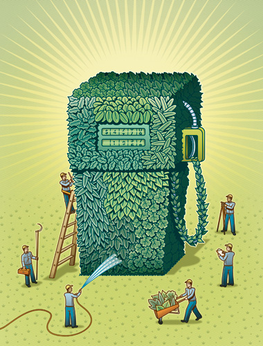 image: Growing Better Biofuel Crops