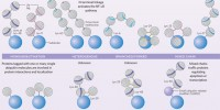 image: Ubiquitin basics