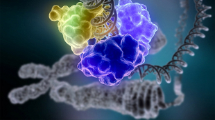 image: One Million Genomic Datasets