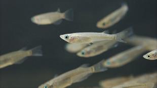 image: Space-bound Fish