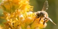 image: Bees Reverse Brain Aging