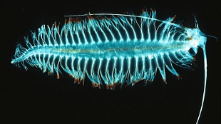 image: The Plankton Schooner