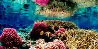 image: UV Radiation Frying Marine Life