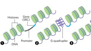 image: DNA, Contortionist