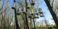image: A Cloud for Bats