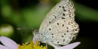 image: More Mutations in Fukushima Butterflies