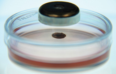 MAGNETIZED CULTURE: With Nano3D's Bio-Assembler, cells are fed iron oxide nanoparticles so that they can be manipulated with a magnet.