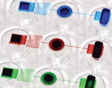 NEARLY NATURAL: The MiCA plate (at left) allows cells grown in a hydrogel (center well) to receive a constant flow of nutrients from the inlet cell (far left) without the aid of a bioreactor.