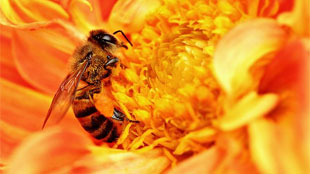 image: Controlling Bee Fate