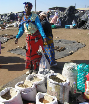 A plant trader selling medicinal plants at the Mona Market, KwaZulu-Natal, South Africa.
