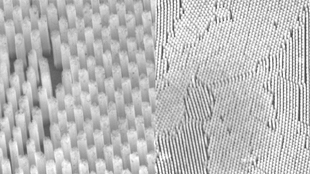 Scanning electron micrograph images of the nanowire forest.
