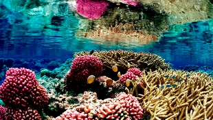 image: Mapping Coral Reefs