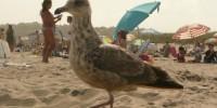 image: Dogs Improve Beach Sanitation