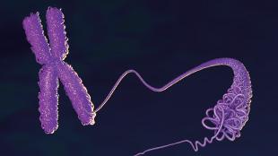 Infographic: The Epigenetic Lnc View full size JPG   PDF