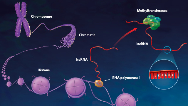 image: The Epigenetic Lnc
