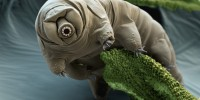 WINNER: This image of a water bear (phylum Tardigrada), was taken by scientist-photographer duo, Eye of Science, who obtained some water bears from the University of Stuttgart and carefully prepared the specimens by killing the animals, washing them with alcohol, rinsing them in a high-pressure chamber with liquid carbon dioxide, drying them, and coating them with gold or platinum. They then picked up a single water bear with a loose hair, placed it on the specimen holder, and surrounded it with bits of moss for the scanning electron microscope photo shoot. Eye Of Science/Photo Researchers