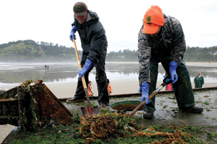 DOCK WORKERS: Oregon Department of Fish and Wildlife staff and volunteers remove marine organisms from the wayward dock, which landed at Agate Beach.