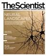 The Scientist November 2013 Cover