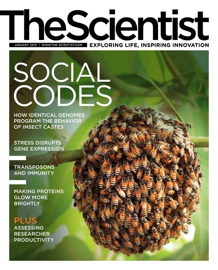 The Scientist January 2015 Cover