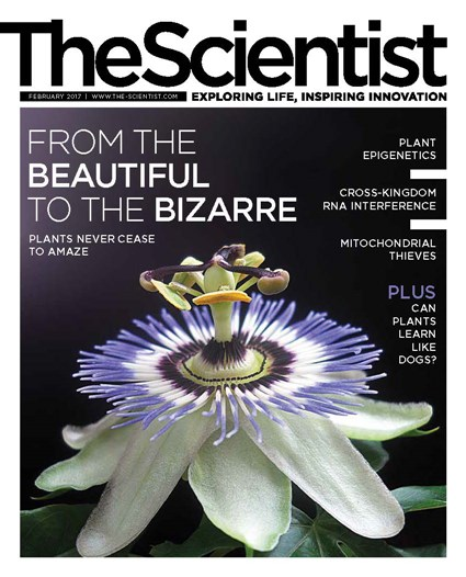 The Scientist February 2017 Cover